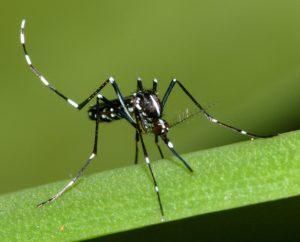 Microclimate and larval habitat density predict adult Aedes Albopictus abundance in urban areas
